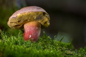 rourky u hřibovité houby